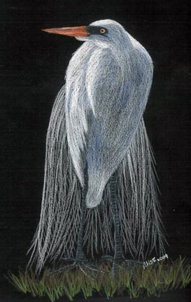 Standing Egret Colored Pencil PDF DOWNLOAD