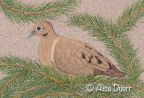 Resting Dove Colored Pencil PDF DOWNLOAD