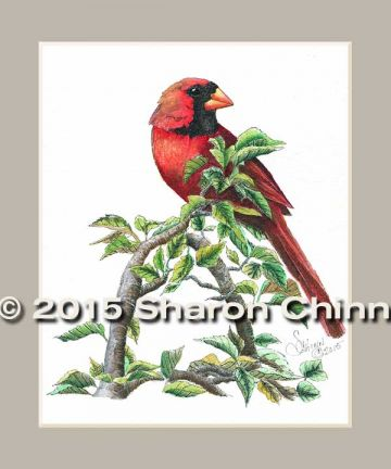 Treetop Perch Cardinal Pen and Ink Pattern by Mail - Sharon Chinn